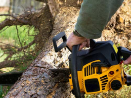 cost of tree trimming Toronto
