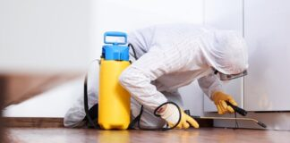 best pest control lutwyche