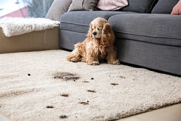to clean carpets
