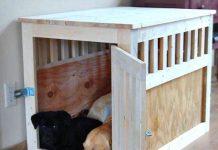 enclosed dog crate